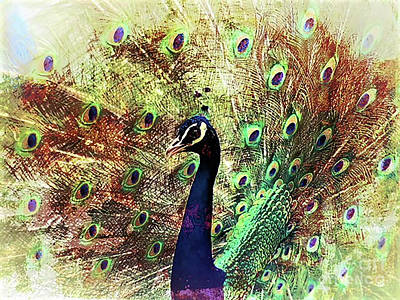 Digital Art - Peacock Portrait  by Kathy Kelly