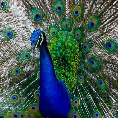 Photograph - Peacock Portrait by Susan Molnar