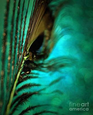 Nature Abstract Photograph - Peacock Pride by Krissy Katsimbras