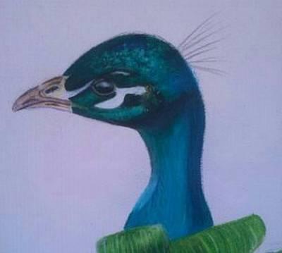 Iridescent Drawing - Peacock by Sara Edwards