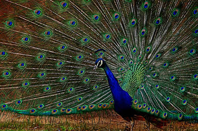 Digital Art - Peacock Strut 2 by Ernie Echols
