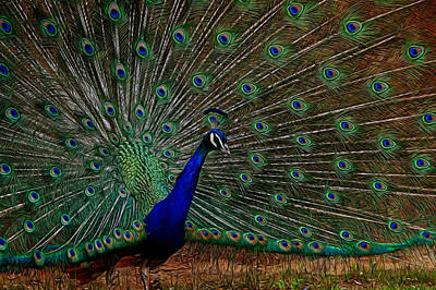 Peacock Digital Art - Peacock Strut by Ernie Echols