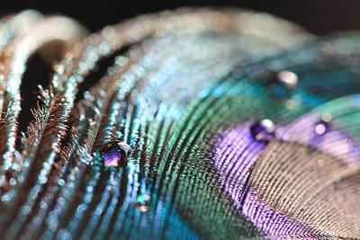 Photograph - Peacock Swirls by Angela Murdock