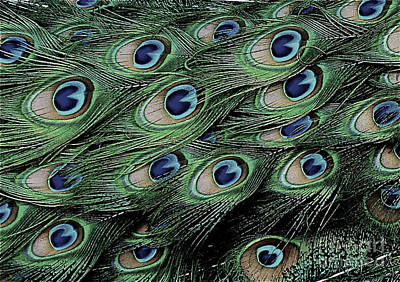 Photograph - Peacock Tail Feathers  by Jean Wright