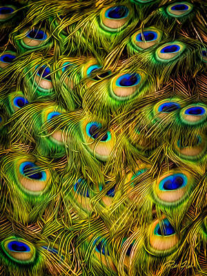 Photograph - Peacock Tails by Rikk Flohr