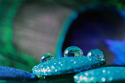 Photograph - Peacock Water Drops And Glitter by Angela Murdock