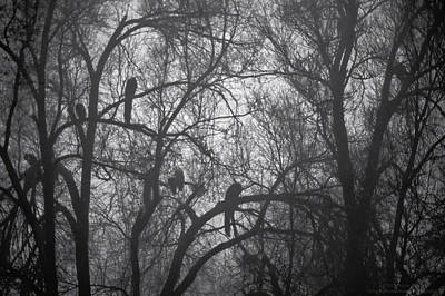 Photograph - Peacocks In The Mist Bw by Denise Dube