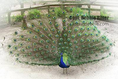 Photograph - Peafowl 100_2091 by Captain Debbie Ritter