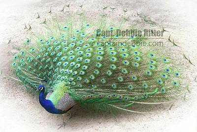 Photograph - Peafowl 100_2092 by Captain Debbie Ritter