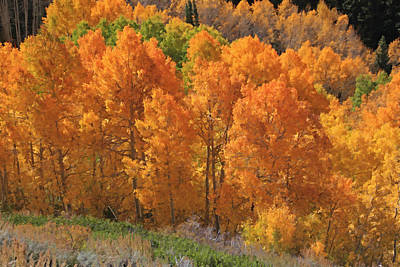 Big Cottonwood Canyon Photograph - Peak Color At Guardsman Pass by Donna Kennedy