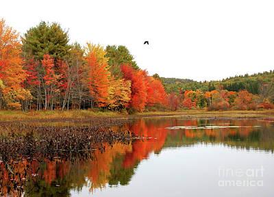 Photograph - Peak New England Foliage by Staci Bigelow