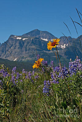 Photograph - Peak Of Summer by Katie LaSalle-Lowery