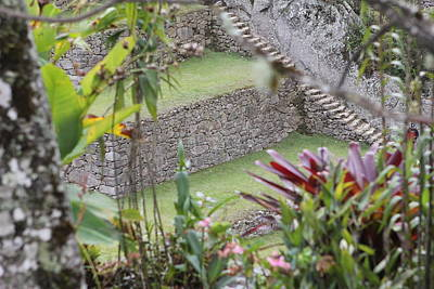 Photograph - Peeking In At Machu Picchu by Brandy Little