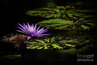Photograph - Peaking Out In Purple by Sabrina L Ryan