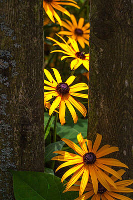 Photograph - Peaking Through The Fence by Jeff Folger