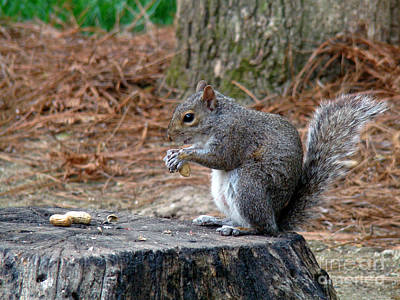 Photograph - Peanut Feast by Sue Melvin