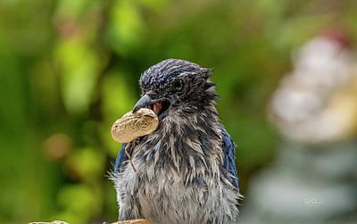 Photograph - Peanut Hunter by Bill Posner
