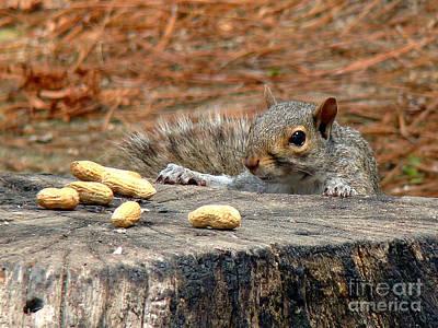 Photograph - Peanut Surprise by Sue Melvin