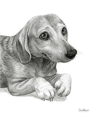 Eyes Detail Drawing - Peanut The Dachshund by Cara Bevan
