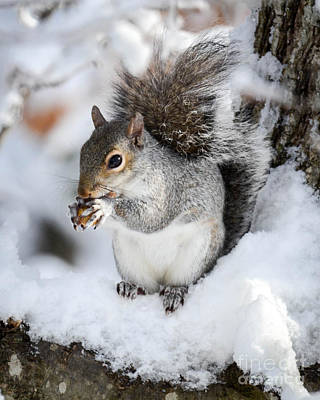 Photograph - Peanuts In The Snow by Amy Porter