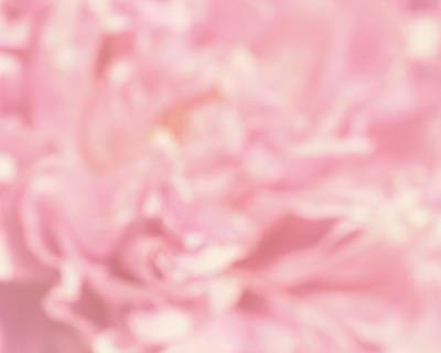Photograph - Peony Passion No. 2 by Photography by Tiwago