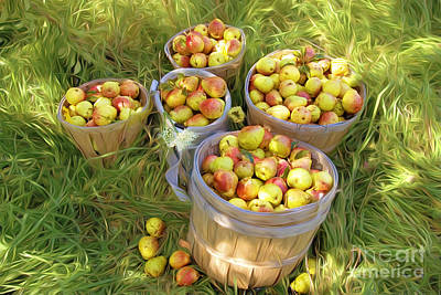 Pears Photograph - Pear Harvest #1 by George Robinson