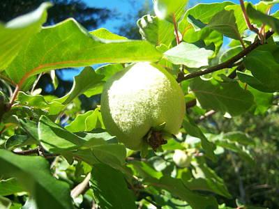 Pear Art Print by Ken Day