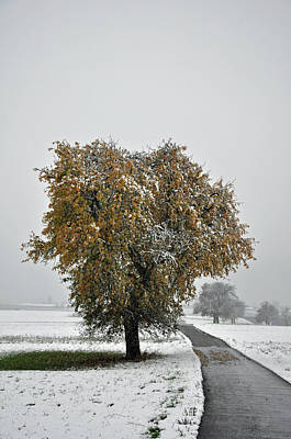 Photograph - Pear Tree In Autumn Leaves Snow Covered Meadows by Martin Stankewitz