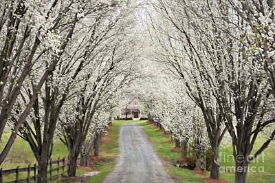 Pear Tree Lane Art Print by Benanne Stiens
