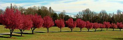 Photograph - Pear Trees In A Row by Cynthia Guinn