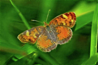 Pearl Crescent Original