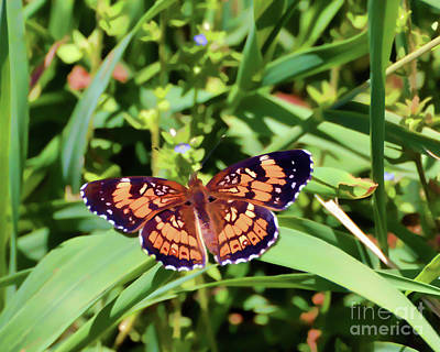 Photograph - Pearl Crescent Butterfly by Kerri Farley