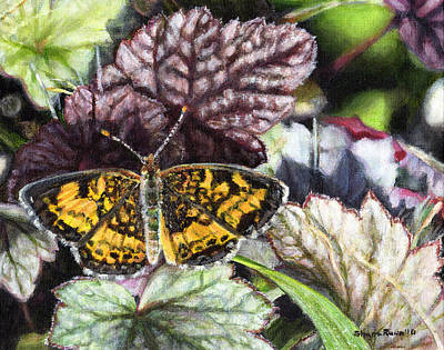 Painting - Pearl Crescent On Coral Bells by Shana Rowe Jackson