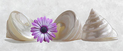 Photograph - Pearl Troca Shells Pano With Daisy by Gill Billington