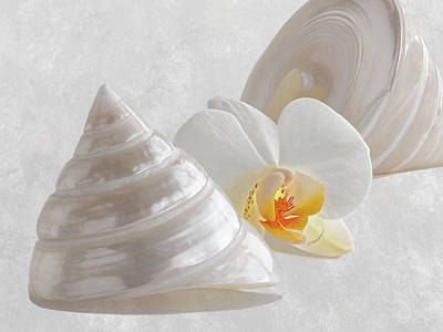 Photograph - Pearl Trochus Shells With White Orchid by Gill Billington
