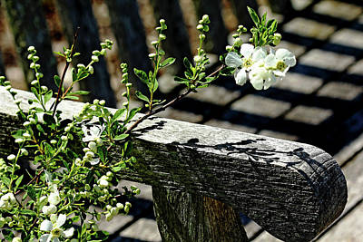 Photograph - Pearls Petals And Shadows by Debbie Oppermann