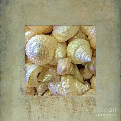 Photograph - Pearly Troca Shells by Gabriele Pomykaj