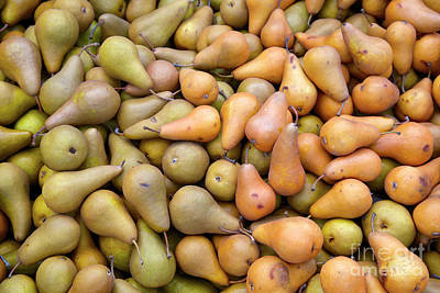 Pears At The Harvest Art Print
