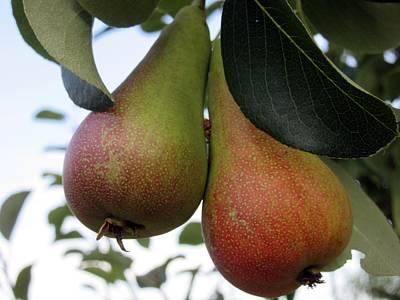 Photograph -  Pears by Vesna Martinjak