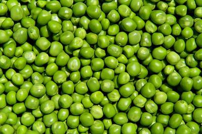 Photograph - Peas 2 by Kathryn Meyer