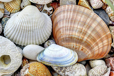 Photograph - Pebble Stones And Shells by Michal Boubin
