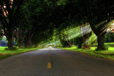 Photograph - Pecan Alley Rays - Arkansas - Landscape by Jason Politte