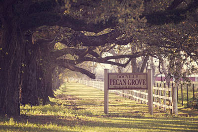 Pecan Grove  Art Print by Alicia Morales
