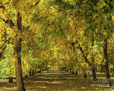 Photograph - Pecan Grove by Steve Whalen