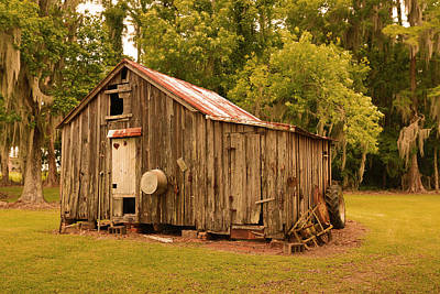 Photograph - Cypress Shed by Ronald Olivier