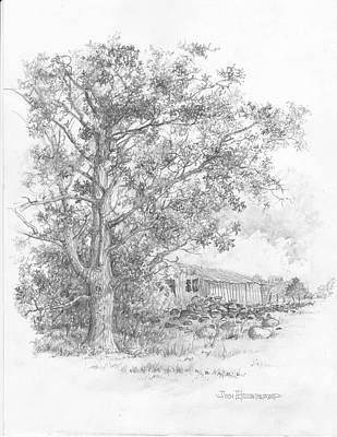 Pecan Tree Art Print by Jim Hubbard