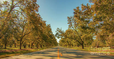 Olympic Sports - Pecan Tree Lined Roadway by Edie Ann Mendenhall