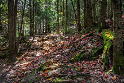Photograph - Peck Lake Trail In Autumn by Irwin Seidman