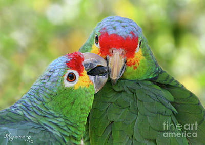 Photograph - Pecking Order by Mariarosa Rockefeller