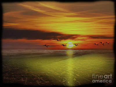 Photograph - Pedasi Panama Pelicans Soar Into The Sunset by Al Bourassa